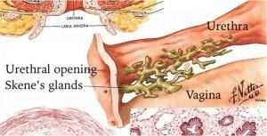 PRP Vaginal Restoration Treatment